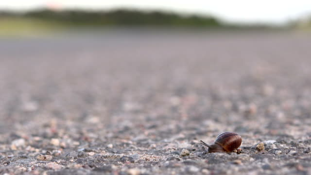 snail on the road - snail stock videos & royalty-free footage