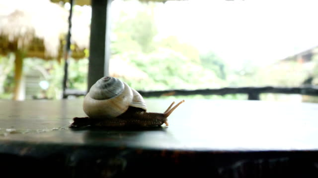 snail on the run - animal shell stock videos & royalty-free footage