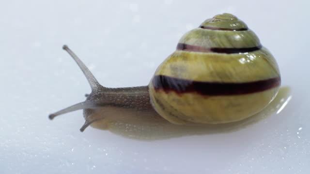 stockvideo's en b-roll-footage met slo mo ms snail on white background - de volgende stap