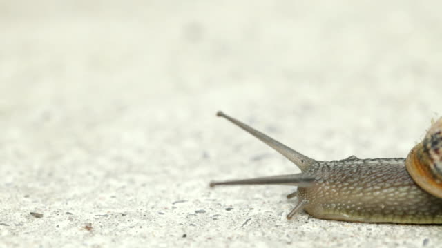 snail passing by - snail stock videos & royalty-free footage