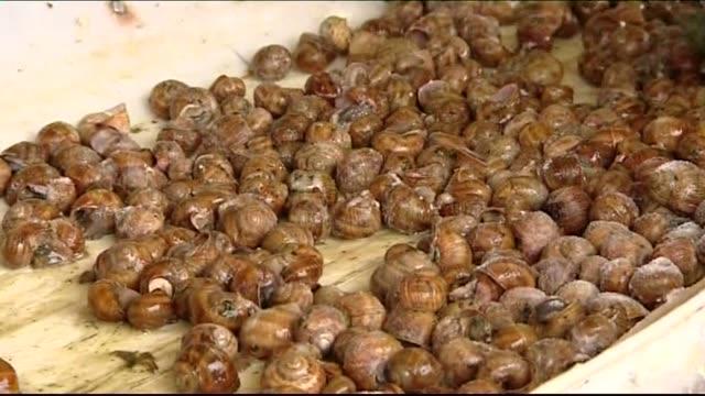vidéos et rushes de snail shells - mollusque