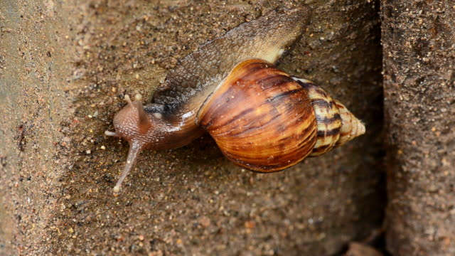snail - mollusc stock videos & royalty-free footage