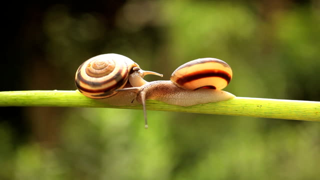 snail - snail stock videos & royalty-free footage