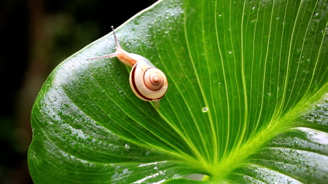 snail - snail stock videos & royalty-free footage