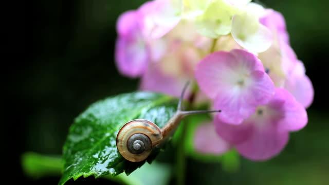 snail - plusphoto stock videos & royalty-free footage