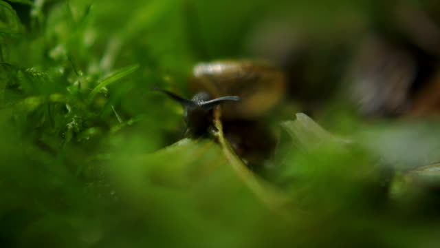 snail - mollusk stock videos & royalty-free footage