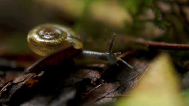 snail - translucent stock videos and b-roll footage