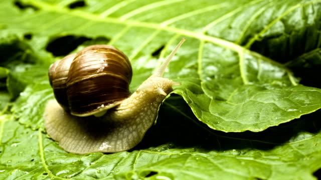 vídeos de stock e filmes b-roll de caracol - snail