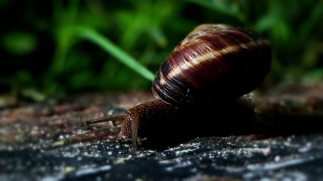 snail - slimy stock videos & royalty-free footage