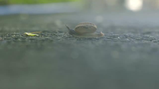 vídeos de stock, filmes e b-roll de caracol - gastrópode