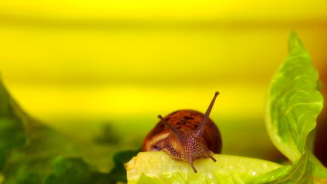 vídeos y material grabado en eventos de stock de caracol - molusco