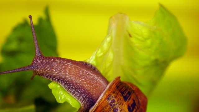 vídeos de stock, filmes e b-roll de caracol - molusco invertebrado