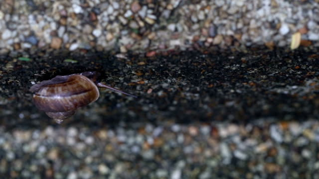 Snail walking on the old cement floor.