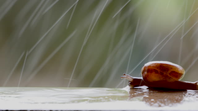 snail walking with rain - snail stock videos & royalty-free footage