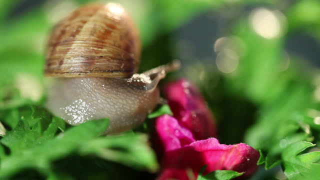 snail with pink flower in studio city - studio city stock videos & royalty-free footage