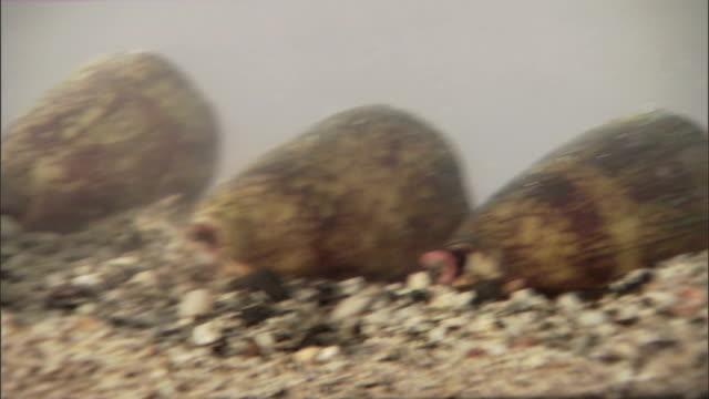 vídeos de stock, filmes e b-roll de snails lie in the bottom of a tank. - gastrópode