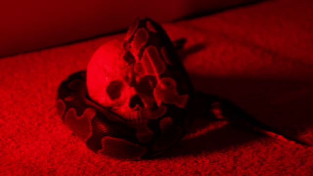 snake and human skull - gothic style stock videos & royalty-free footage