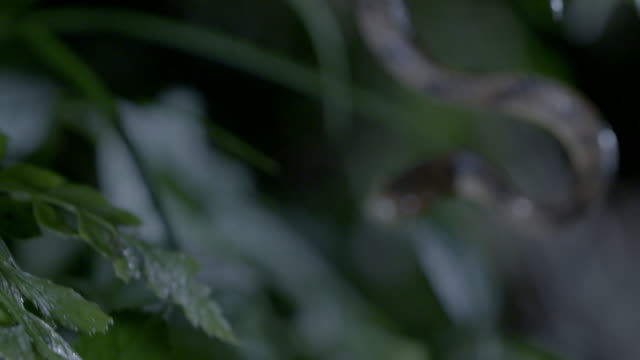 vídeos de stock, filmes e b-roll de snake and the slug on a fern - gastrópode