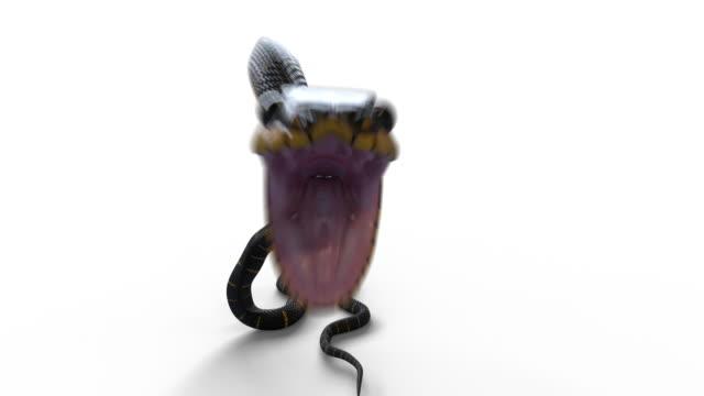 vidéos et rushes de attaque de serpent sur le blanc avec deux canaux alpha comprenant et excluant l'ombre - animal mouth