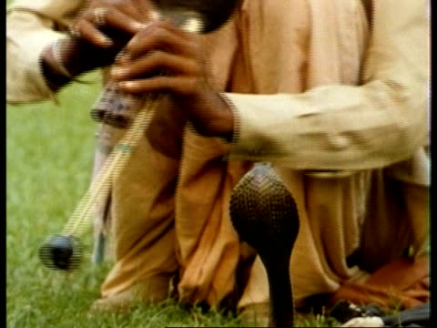 stockvideo's en b-roll-footage met cu snake charmer and indian cobra, naja naja, man playing musical instrument to snake - charmant