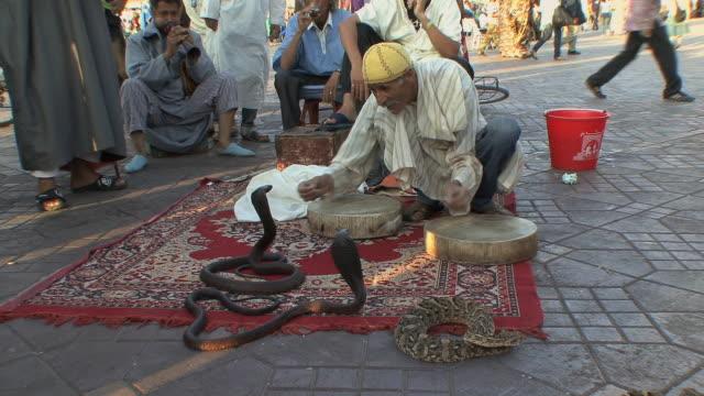 vídeos y material grabado en eventos de stock de ws snake charmer and spectators in djemaa el fna square, marrakech, morocco - grupo pequeño de animales