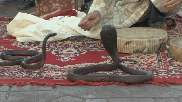 ws zi zo cu snake charmer in djemaa el fna square, marrakech, morocco - korb stock-videos und b-roll-filmmaterial