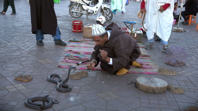 snake charmer teasing cobra - schlange kriechtier stock-videos und b-roll-filmmaterial