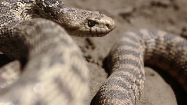 snake close up - snake stock videos and b-roll footage