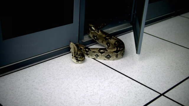 ds snake coming into server case in server room - see other clips from this shoot 1480 stock videos and b-roll footage
