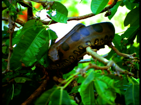 A snake curls over a tree branch.