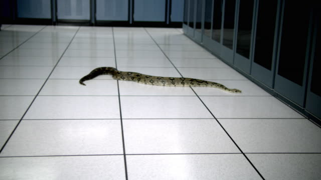 ws cs cu snake on floor in middle of server room - see other clips from this shoot 1480 stock videos and b-roll footage