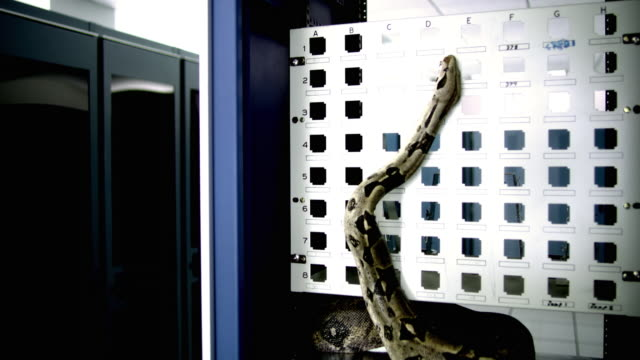 ds ws snake on server rack in middle of server room - see other clips from this shoot 1480 stock videos and b-roll footage