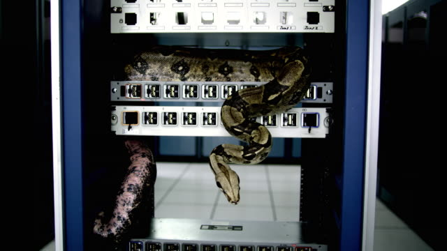 ws ds cu snake on server rack in middle of server room - see other clips from this shoot 1480 stock videos and b-roll footage