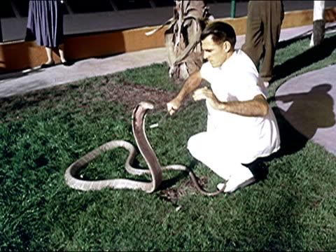 vidéos et rushes de 1956 snake park serpentarium, florida - panneau d'entrée