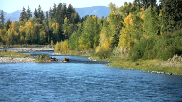 snake river and fall colors - snake river stock videos & royalty-free footage