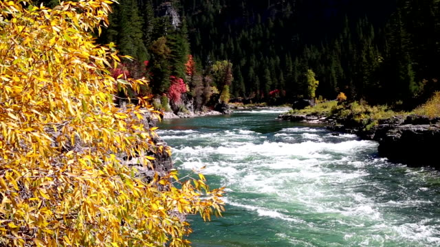 snake river, wyoming - jackson hole stock-videos und b-roll-filmmaterial