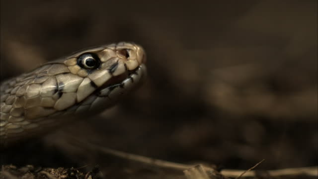a snake spits venom. - toxic substance stock videos & royalty-free footage