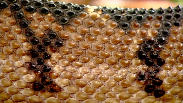 a snake's skin is seen close up as it slithers. - scaly stock videos & royalty-free footage
