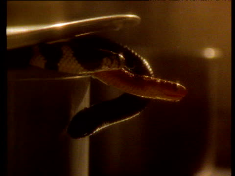 snakes slither out from under saucepan lid - lid stock videos and b-roll footage
