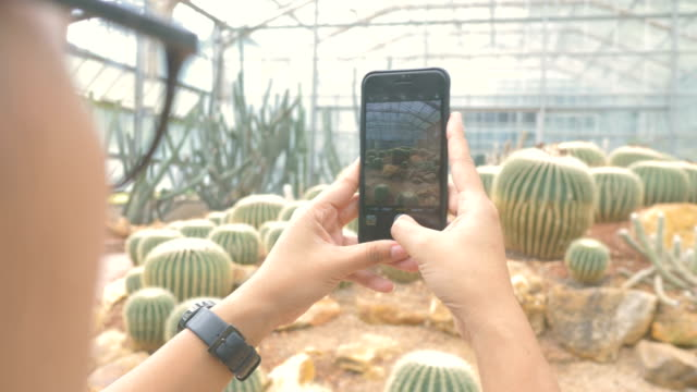 snap kaktus - cactus stock-videos und b-roll-filmmaterial
