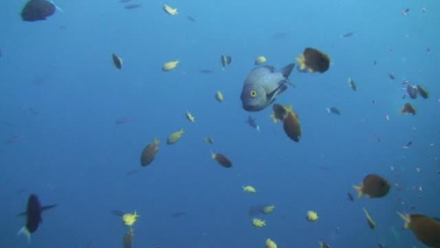 snapper - invertebrate stock videos & royalty-free footage