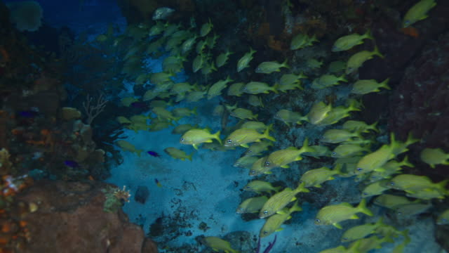 snappers fish - yucatan peninsula stock videos and b-roll footage