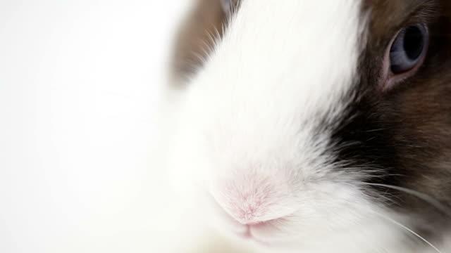 Schnupfen-Kaninchen