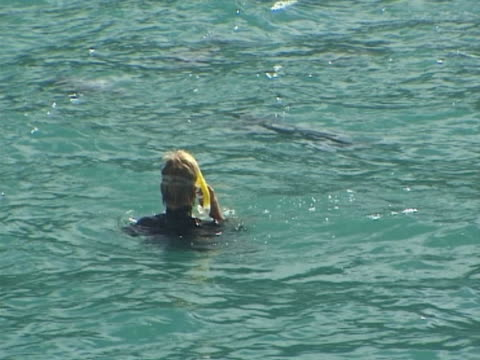 snorkeler swimming with hectors dolphins - unknown gender stock videos & royalty-free footage