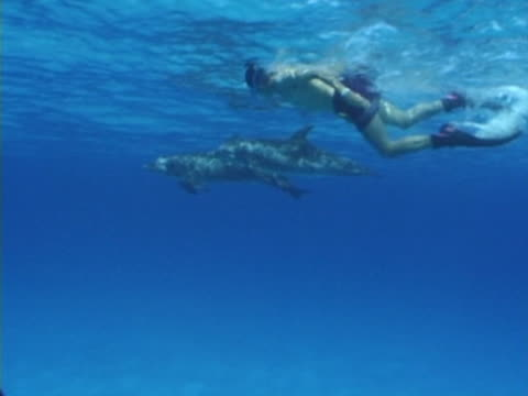 Snorkeler with Atlantic spotted dolphins