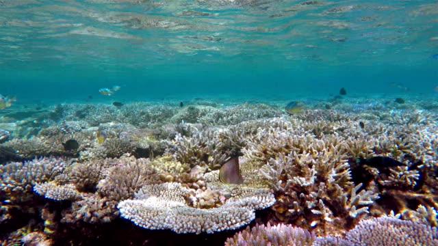vídeos de stock, filmes e b-roll de snorkeling sobre recifes de corais nas maldivas - ponto de vista de mergulhador