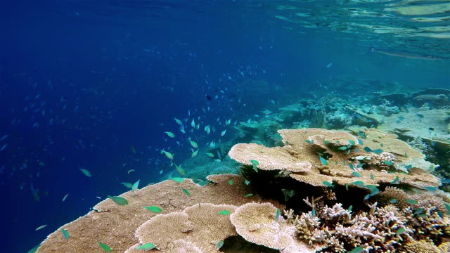 snorkeling along a tropical coral reef on maldives - ari atoll stock videos & royalty-free footage