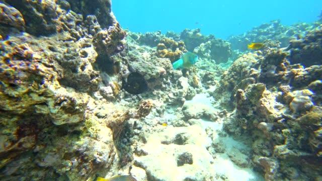 pov schnorcheln in la digue island, seychellen - riff stock-videos und b-roll-filmmaterial