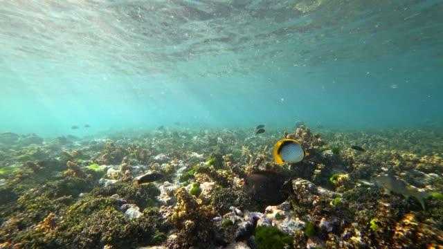POV Schnorcheln in la Digue Island, Seychellen