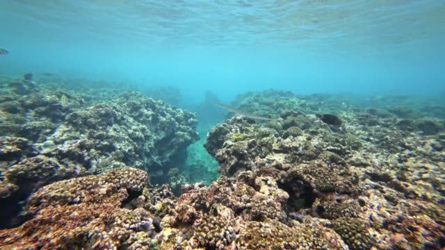 POV snorkeling at la Digue Island, Seychelles